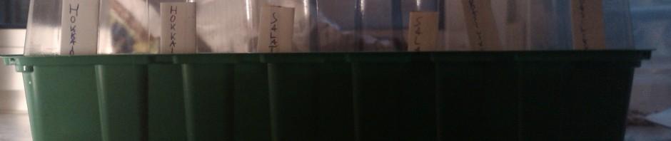 Basilikum, salat, hvidløg og græskar