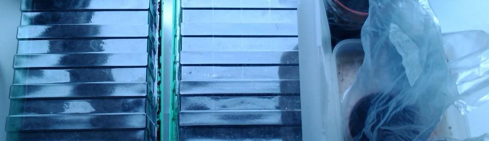 Opstart i vindueskarmen 2012